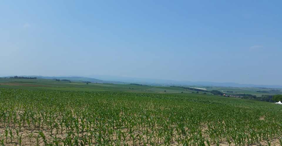 paysage1gougenheim