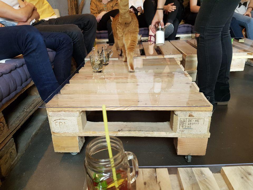 chat-sur-la-table