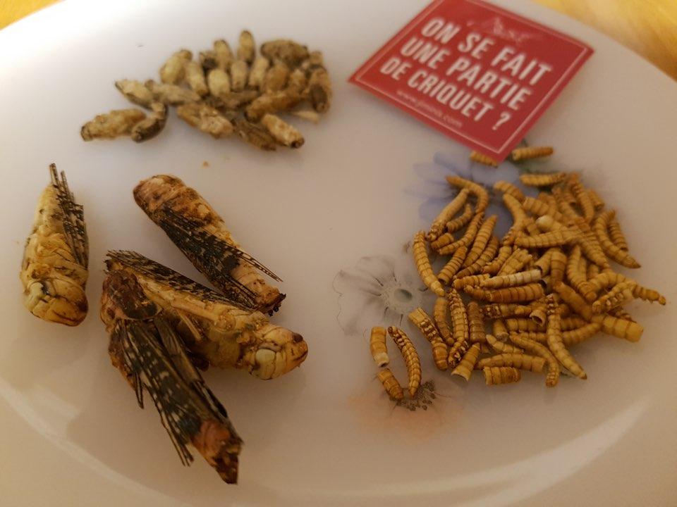 On prend un ver(re) avec Jimini's : manger des insectes
