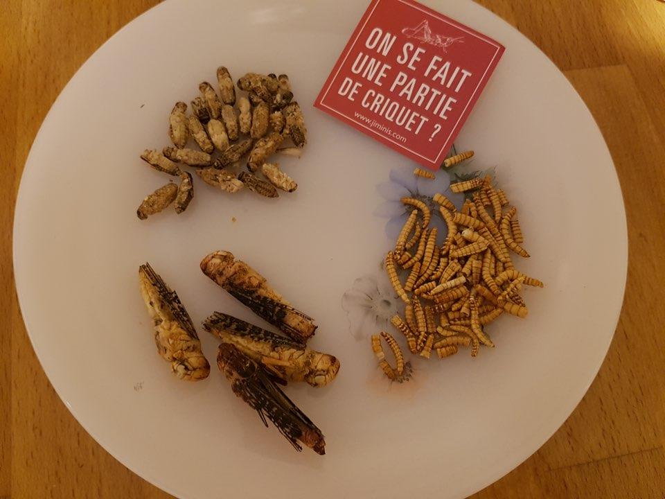Assiette-insecte-vue-haut