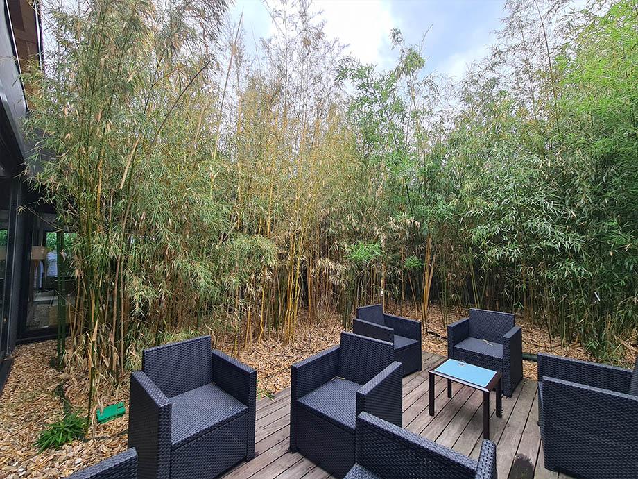bambou-source-des-sens-morsbronn-les-Bains